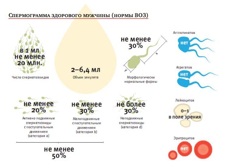 kakoe-kolichestvo-spermi-neobhodimo-dlya-zachatiya